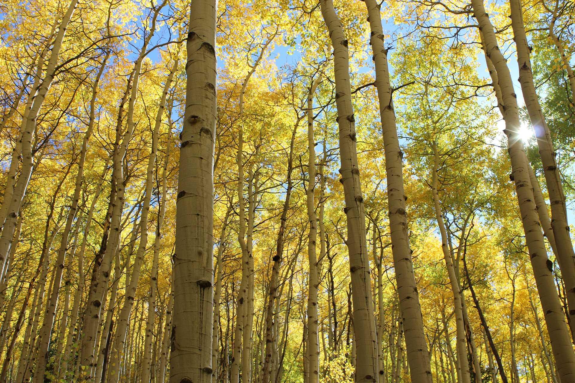 Fall in Lake City Area