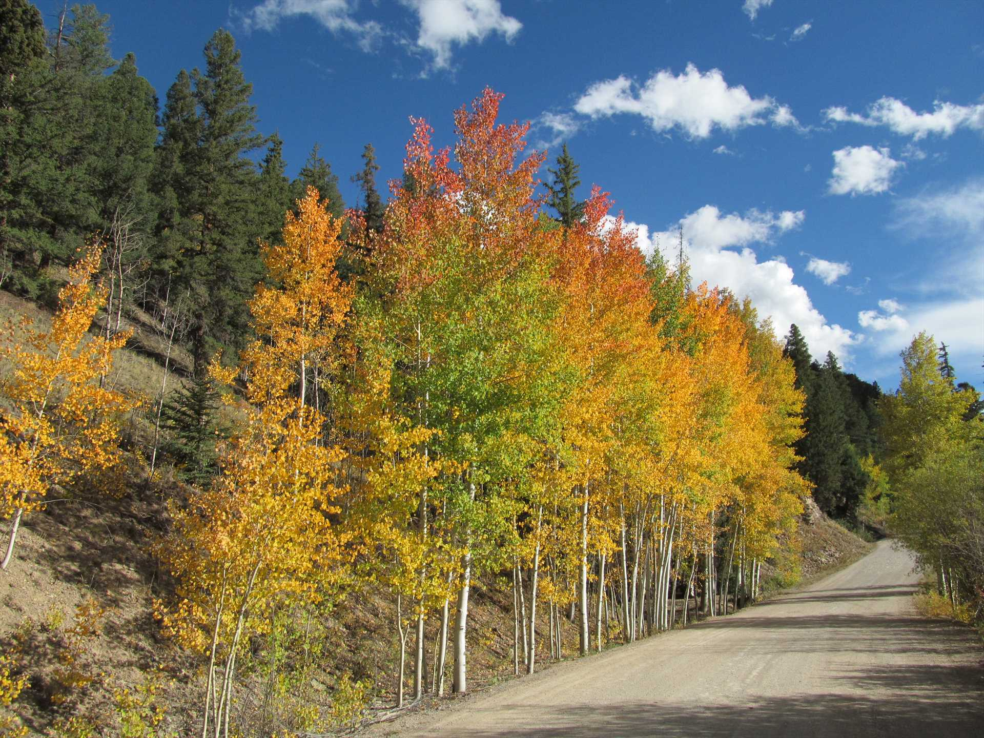 Aspens along CR33 on the east side of the lake