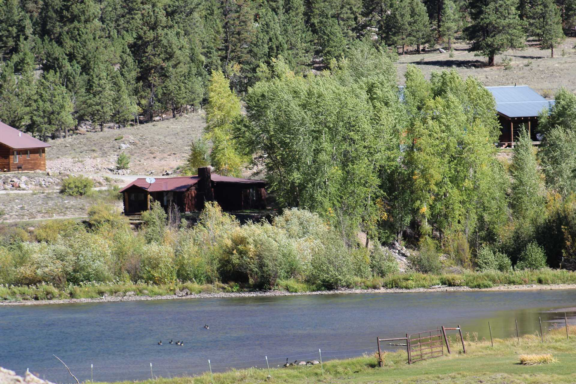 Lake Fork of the Gunnison in Front of the Cabin